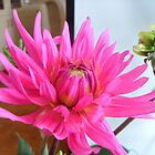 Dahlia with bud by Ana Belaj