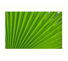 fresh green leaf Art Print