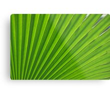 fresh green leaf Metal Print