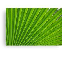 fresh green leaf Canvas Print