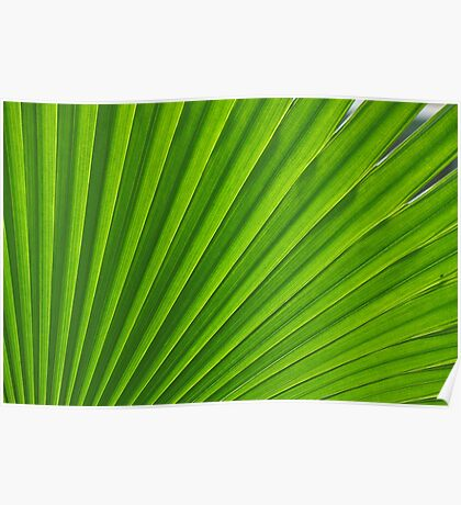 fresh green leaf Poster