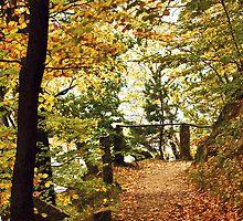 Autumn 1 by Dominika Aniola