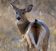 Doe a Deer a Female Deer by Heather Pickard