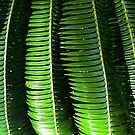Cycad by Jaee Pathak