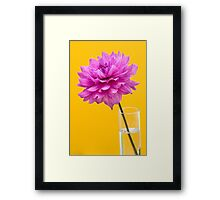 Pink Dahlia Flower in Vase against Yellow Background Framed Print