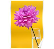 Pink Dahlia Flower in Vase against Yellow Background Poster