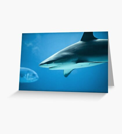 Caribbean Reef Shark - Marine Life Photography Greeting Card