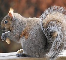 Chuckie: The Brindle Squirrel by deb cole