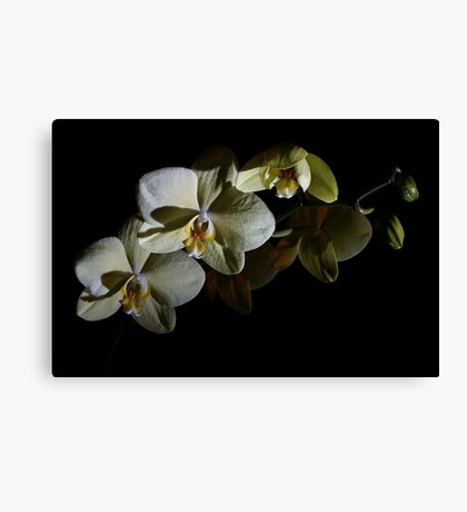 Orchids in the Dark Canvas Print