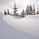 Snow Drift by Tracy Riddell
