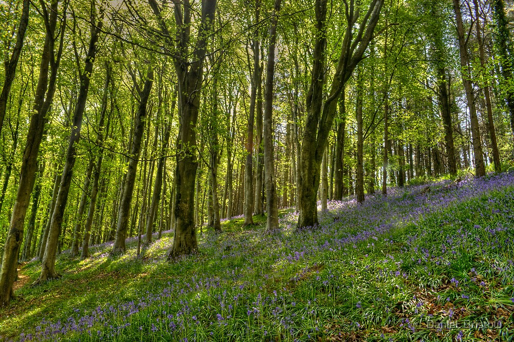 Dorset Spring,  by Daniel  Bristow