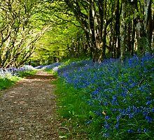 Spring Bluebells by Daniel  Bristow