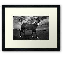 Horse (36-13) Framed Print
