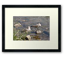 Seagulls Sunning Framed Print