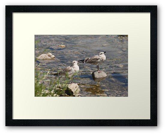 Seagulls Sunning by Thomas Murphy