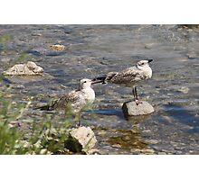 Seagulls Sunning Photographic Print