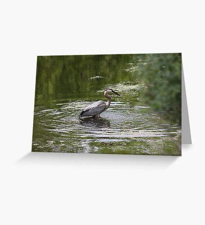 Great Blue Heron with Creek Chub Greeting Card