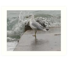 Seagull on end of pier. Art Print