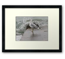 Seagull on end of pier. Framed Print