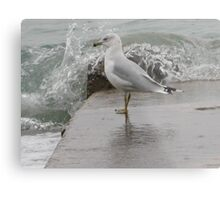 Seagull on end of pier. Metal Print