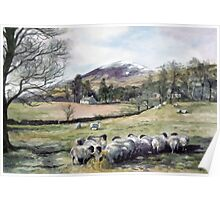 Sheep in Glen Clova Angus Poster