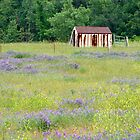 Flower Field With Shed by Carolyn  Fletcher