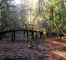 The bridge in the forest. by Allan McKean