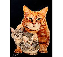 Mom Cat and Two Kittens Photographic Print