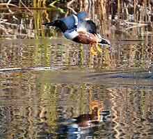 Spoonbill duck  by AZLiane