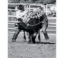 Wild Cow Milking Photographic Print