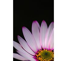 Pink petals in the dark Photographic Print
