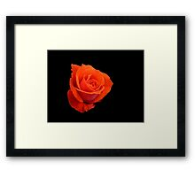 Rose on black Framed Print