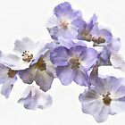 Flowers - watercolour by PhotosByHealy