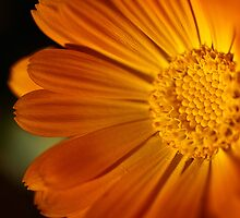 Half the sun by Celeste Mookherjee
