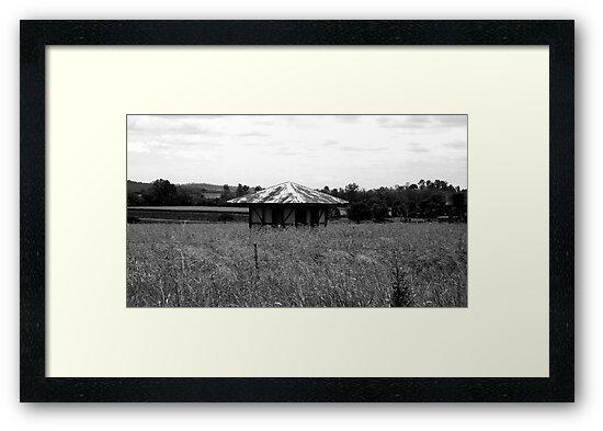 forgotten shed by Mark Batten-O'Donohoe