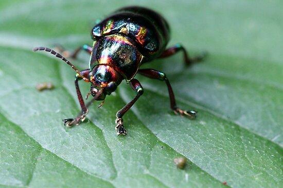 Opalistic Beetle by Joel Fourcard