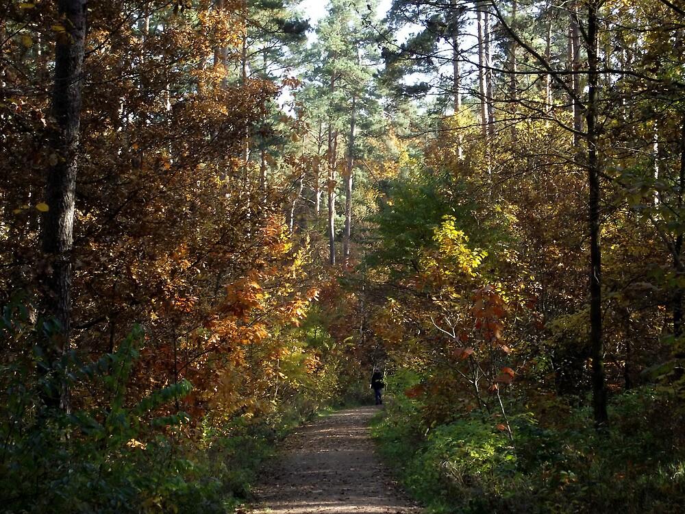 Forest Path by SophiaDeLuna
