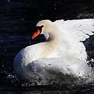 Graceful splashing by Alinka