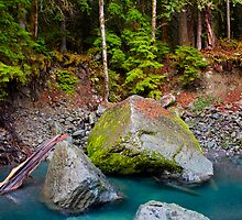 Olympic National Park 1 by Miles Glynn