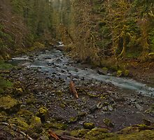 Olympic National Park 2 by Miles Glynn