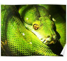 Python-itis. Poster