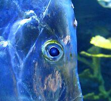 Ol' Blue Eye by kibishipaul