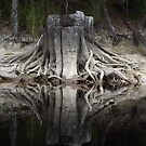 root tendrils snaking around by gaylene