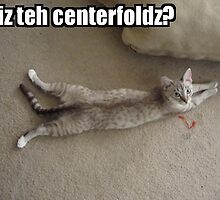 Centerfold Cat by shandab3ar