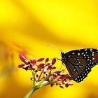 Butterfly, yellow background by Diana Landry