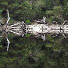twisted looking reflections...on Lake Pieman    TASMANIA by gaylene