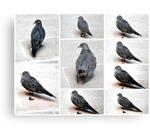 A COLLAGE OF A MOURING DOVE IN THE GARDEN Canvas Print