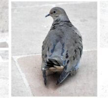 A COLLAGE OF A MOURING DOVE IN THE GARDEN Sticker