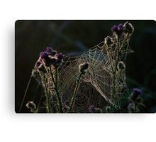 Spinweb Canvas Print