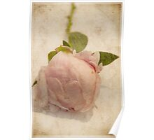 Peonie love Poster